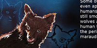 Wolf puppy in moonlite night